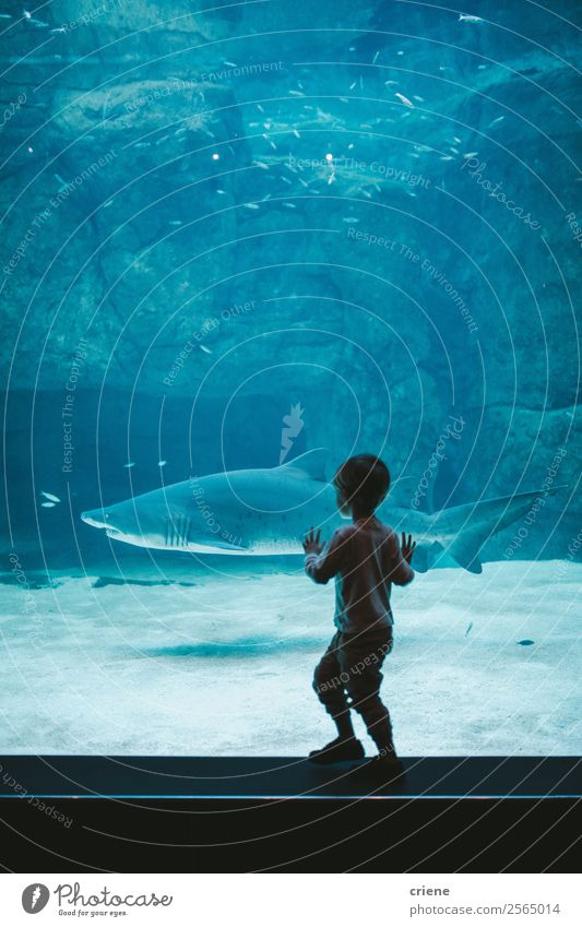 excited boy watching a shark in zoo Child Human being Vacation & Travel Nature Blue Beautiful Ocean Animal Joy Life Family & Relations Happy Boy (child) School