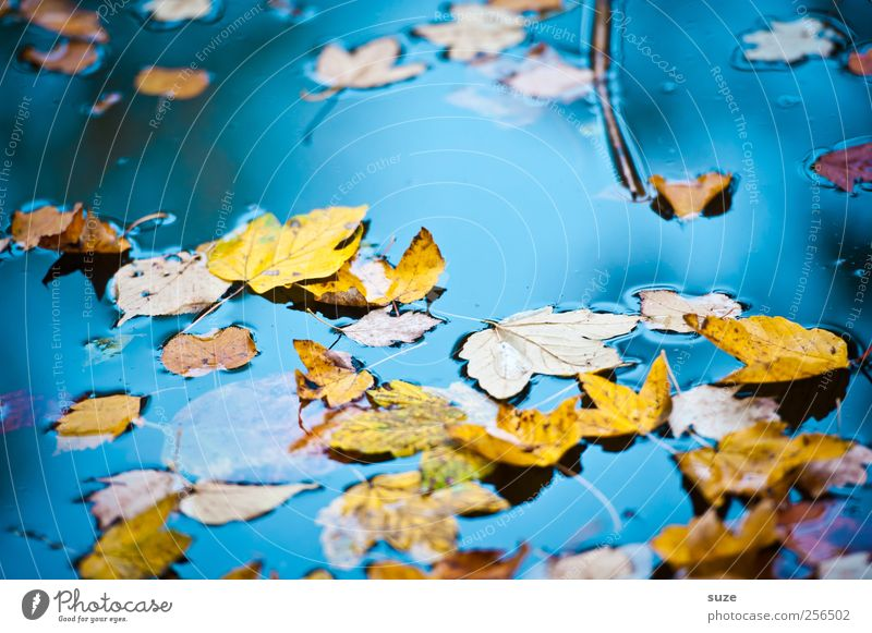 Colourful hustle and bustle Environment Nature Landscape Elements Water Autumn Weather Beautiful weather Leaf Yellow Gold Transience Autumn leaves Autumnal