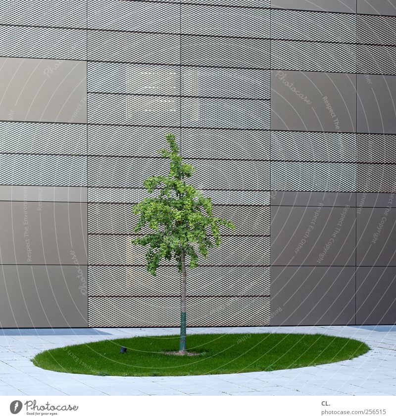 pure nature Nature Tree Grass Leaf Town High-rise Bank building Industrial plant Places Building Architecture Wall (barrier) Wall (building) Facade Simple Green
