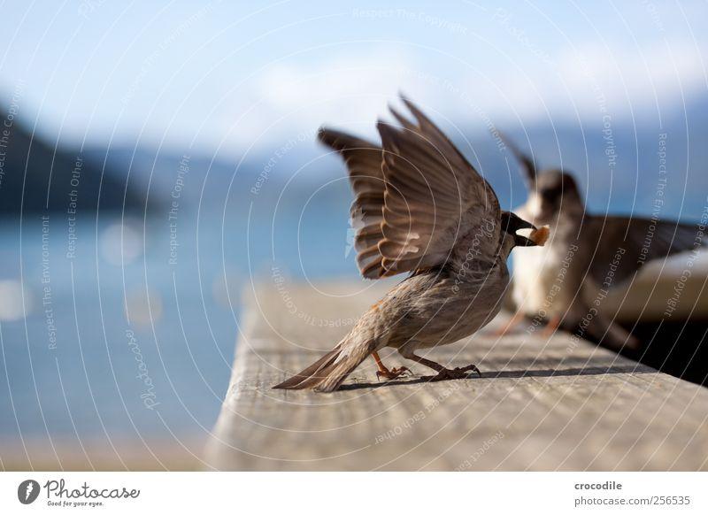 New Zealand 176 Environment Nature Beautiful weather Coast Lakeside Beach Animal Wild animal Bird Sparrow 2 Flying To feed Joy Colour photo Exterior shot