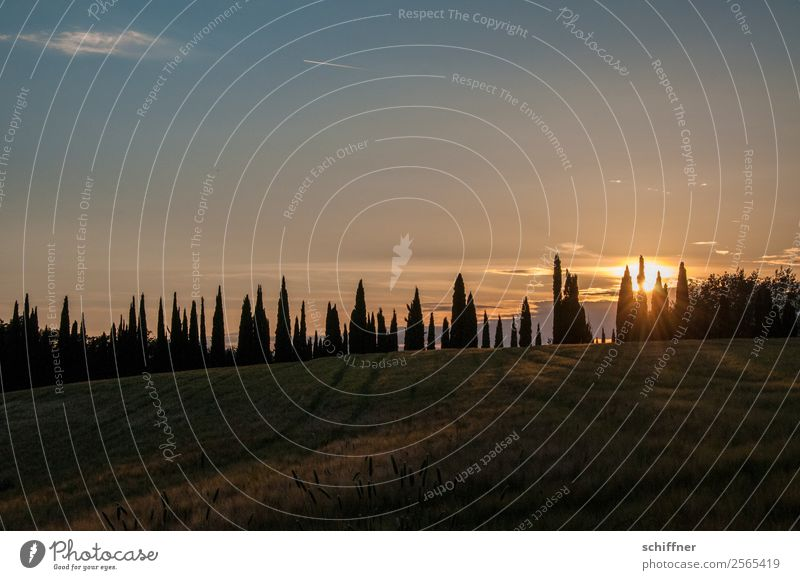 Tuscan dental arch IV Nature Landscape Plant Sun Sunrise Sunset Summer Beautiful weather Tree Meadow Field Yellow Orange Red Black Row Row of trees Cypress
