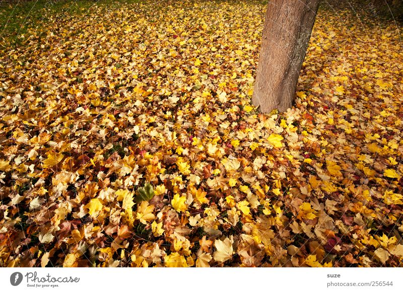 wooden foot Environment Nature Plant Autumn Climate Weather Beautiful weather Tree Tree trunk Authentic Autumnal Autumn leaves Autumnal colours Early fall