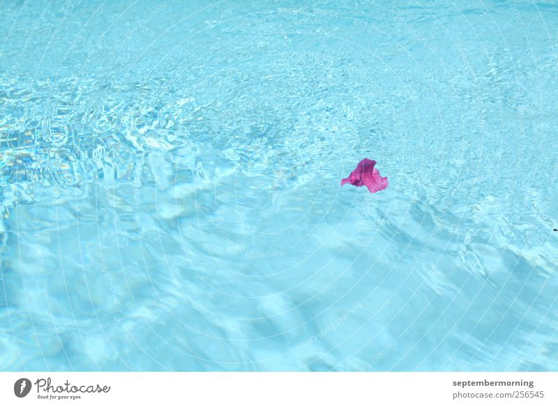 Flower in water Summer Beautiful weather Blossom Water Juicy Clean Blue Violet Loneliness Colour photo Exterior shot Deserted Day Swimming pool