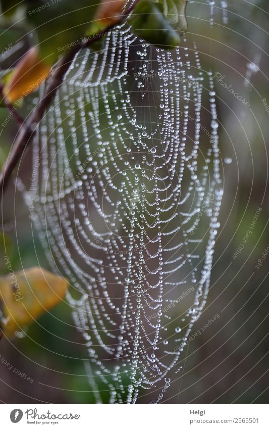 temporarily abandoned ... Environment Nature Drops of water Autumn Fog Plant Leaf Twig Park Spider's web Glittering Hang Wait Esthetic Authentic Uniqueness Cold