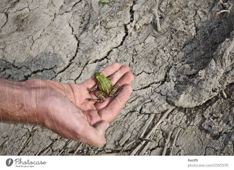 Don't be a frog Climate Warmth Drought Lakeside Pond Animal Frog 1 Sit Slimy Green Shriveled Homeless Hand Perplexed Colour photo Exterior shot