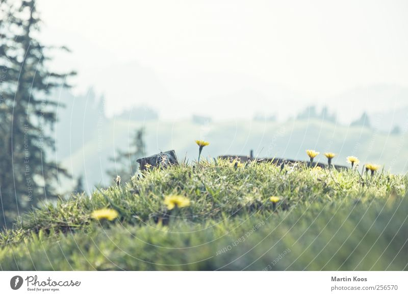 Nature Plant Beautiful Tree Flower Landscape Mountain Yellow Meadow Grass Small Bright Fresh Happiness Blossoming Cute