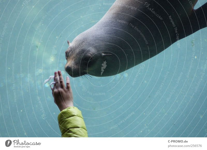 Human being Child Water Hand Animal Wild animal Zoo Interest Aquarium Encounter Seals Underwater aquarium Gray seal
