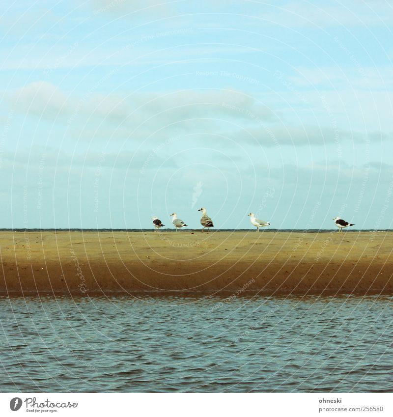 Everybody, follow me! Sky Waves Coast Beach North Sea Ocean Animal Bird Seagull Group of animals Going Row Colour photo Exterior shot Copy Space top