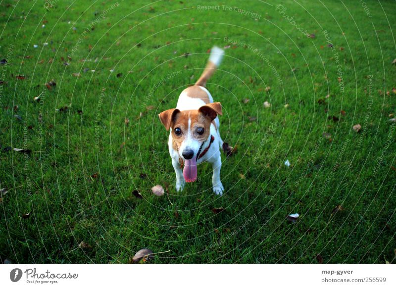 play with me Dog 1 Animal Glittering Communicate Illuminate Authentic Happiness Happy Curiosity Brown Green White Anticipation Trust Loyal Sympathy Friendship