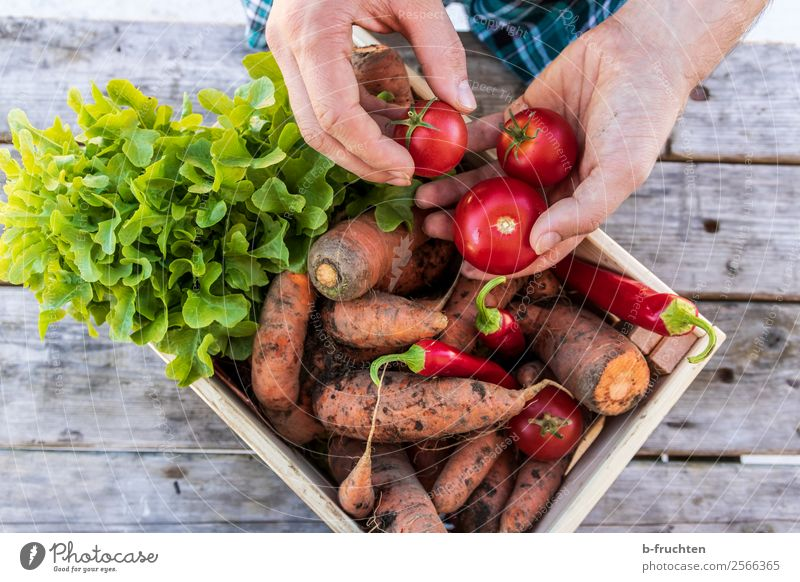 Human being Man Healthy Eating Adults Food Work and employment Fresh Table Stand Fingers Delicious To hold on Vegetable Agriculture Harvest