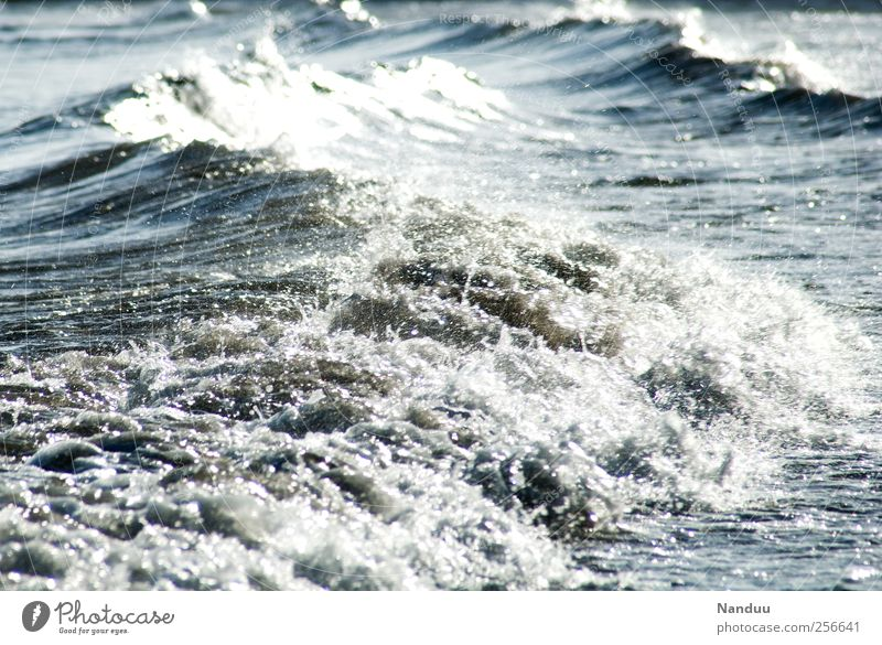 elemental force Environment Nature Infinity Ocean Waves Tide White crest Elements Water Colour photo Subdued colour Exterior shot Detail Day