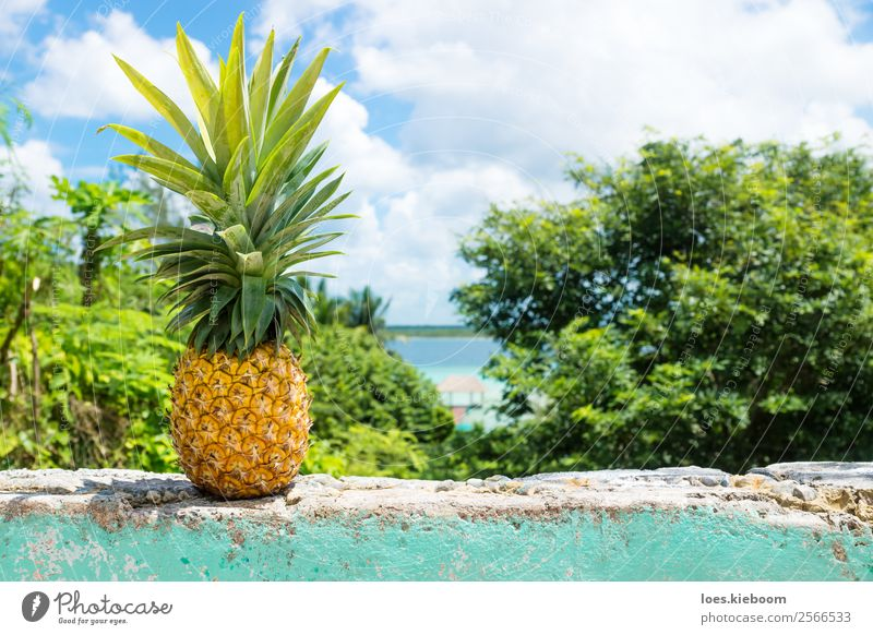 Pineapple on a wall with view to Bacalar lake Vacation & Travel Tourism Summer Sun Sunbathing Nature Water Agricultural crop Coast Lakeside Wall (barrier)