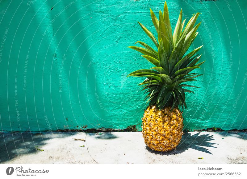 Huge Pineapple on turquoise wall with sunlight Food Fruit Exotic Vacation & Travel Tourism Summer Summer vacation Sun Nature Wall (barrier) Wall (building)