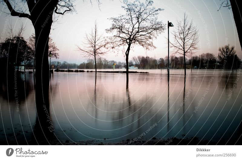 Floods on the Main River Environment Landscape Water Sky Sunrise Sunset Tree Coast River bank Frankfurt Cold Nature Surrealism Environmental pollution Town