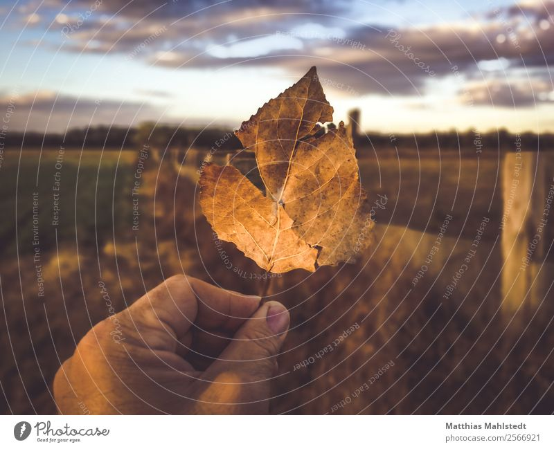 End Of Summer Hand Fingers Nature Landscape Plant Sky Clouds Horizon Sunrise Sunset Beautiful weather Leaf Field Touch To hold on Brown Contentment Serene Calm