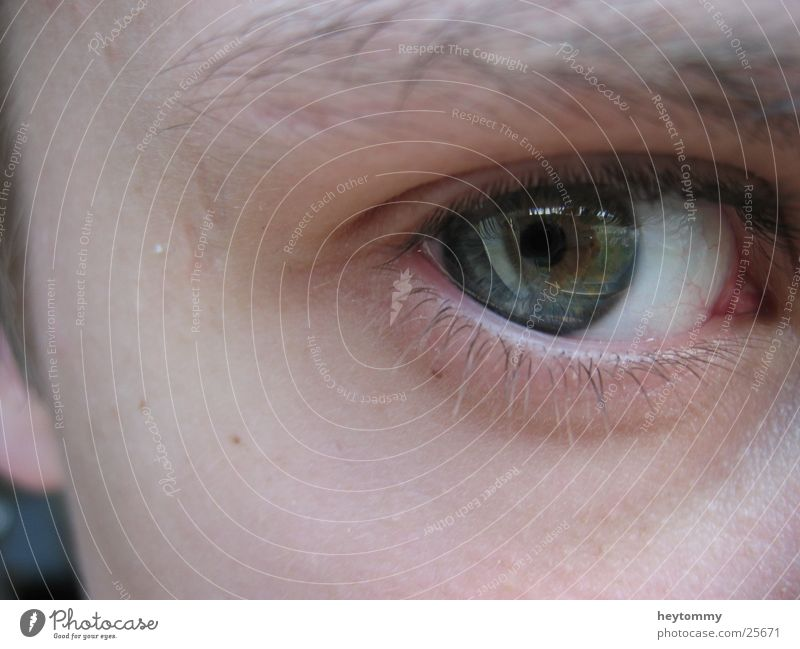 One moment, please! Green Half Strong Eyelash White Eyebrow Pupil Hope Grief Eyes Face Senses Eagles eyes Intuition Vision Man eye angle Blue Human being Part