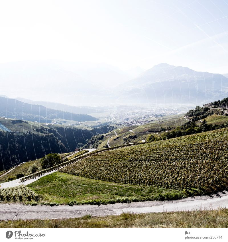 early wine Senses Fragrance Trip Summer Mountain Nature Autumn Beautiful weather Foliage plant Vine Vineyard Bunch of grapes Valley Small Town