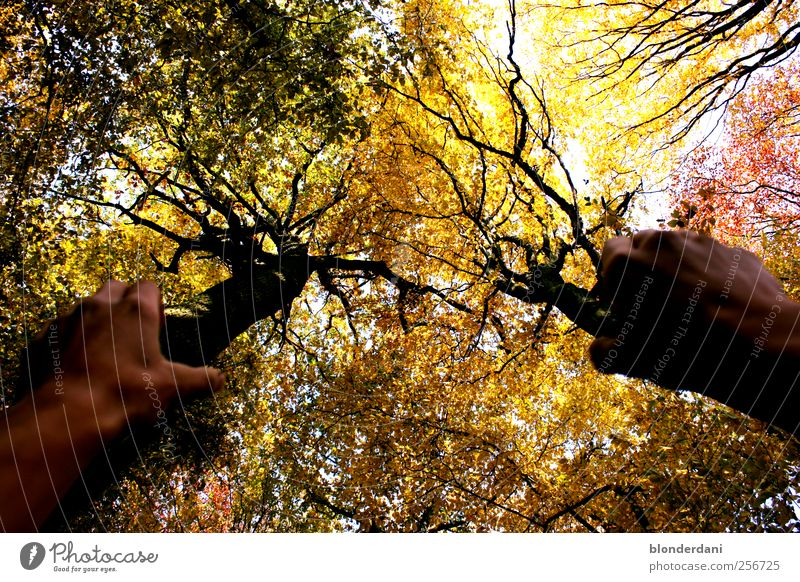 Nature Hand Tree Calm Forest Autumn Environment Power Arm Stand Treetop Purloin