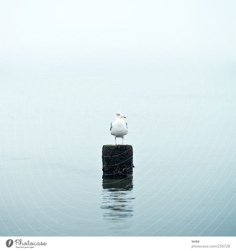Sky Nature Water Ocean Animal Loneliness Calm Environment Bird Weather Climate Wild animal Sit Wait Authentic Elements
