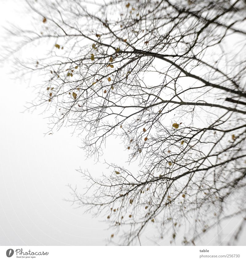 Sky Nature Old Tree Plant Winter Leaf Black Autumn Cold Environment Wood Gray Air Brown Power