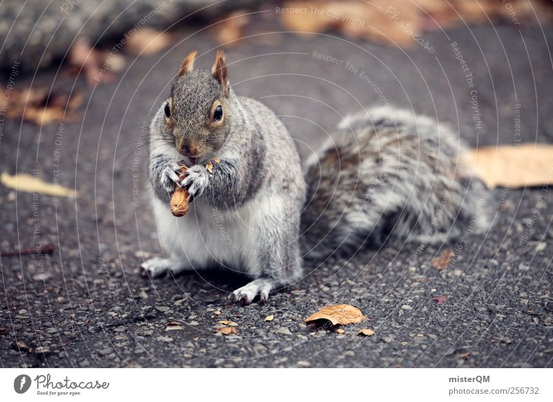 Mr. Eichhorn. Animal Esthetic Appetite Squirrel Nut Nutcrackers Tails Spirited Candy Small Beautiful Cute Thief Pelt Wild animal Fur-bearing animal Street