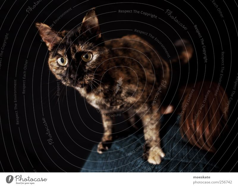 What are you looking at? Human being Woman Adults 1 Pet Cat Animal Esthetic Hip & trendy Curiosity Beautiful Crazy Brown Black Adventure Style Eyes