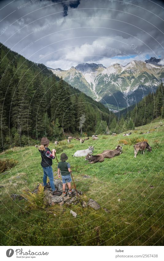 pastoralists Vacation & Travel Agriculture Forestry Environment Nature Landscape Summer Climate Weather Rock Alps Mountain Peak Animal Farm animal Cow