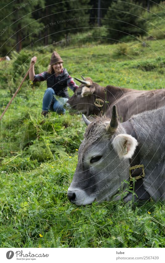 Nature Youth (Young adults) Young woman Landscape Observe Agriculture Pet Cow Forestry Federal State of Tyrol Mountain pasture