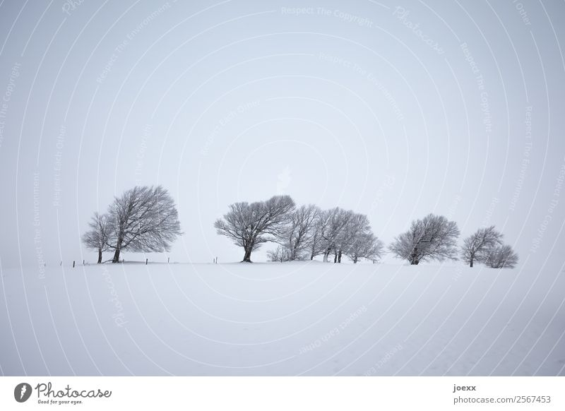 Wind shaped bare trees in hazy winter landscape White Gray Subdued colour Landscape Tree Deserted Winter's day Winter mood Fog Snowscape Exterior shot