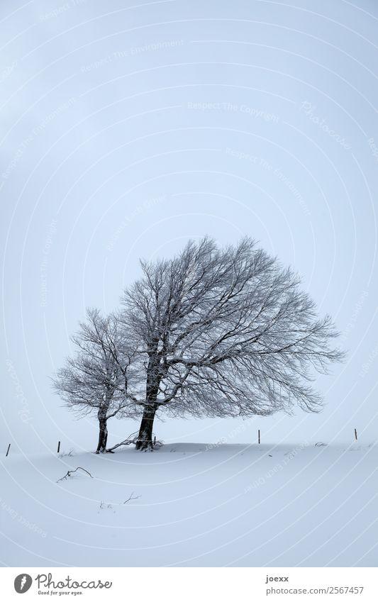 Blue Landscape White Tree Calm Dark Black Cold Snow Ice Gloomy Frost Patient Wind cripple