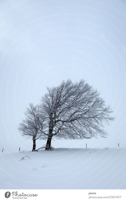 Together Landscape Ice Frost Snow Tree Dark Cold Gloomy Blue Black White Patient Calm Wind cripple Colour photo Subdued colour Exterior shot Deserted Day