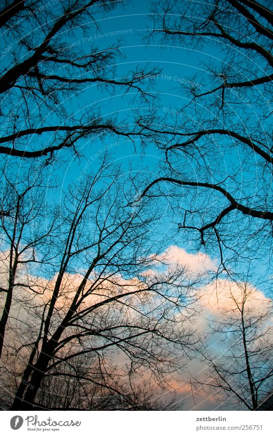 Weather Beautiful Environment Nature Landscape Sky Clouds Autumn Winter Climate Climate change Beautiful weather Tree Garden Park Good Branch Deciduous tree