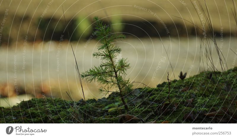Nature Green Tree Plant Environment Dark Autumn Grass Small Authentic Bushes Hill Near Fir tree Moss Silver