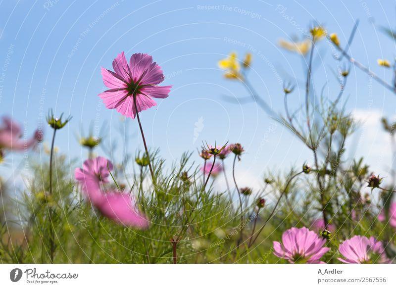 Nature Summer Blue Plant Beautiful Green Landscape Sun Flower Yellow Blossom Meadow Garden Pink Trip Joie de vivre (Vitality)