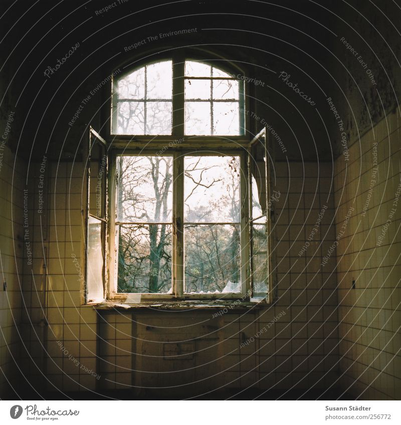 Tree Window Open Beginning Living or residing Kitchen Manmade structures Idyll Derelict Tile Eternity Past Discover Decline Goodbye Fairy tale