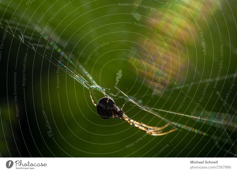 spider in the web Animal Wild animal Spider 1 Catch Hang Athletic Disgust Glittering Natural Contentment Fear Elegant Concentrate Colour photo Multicoloured