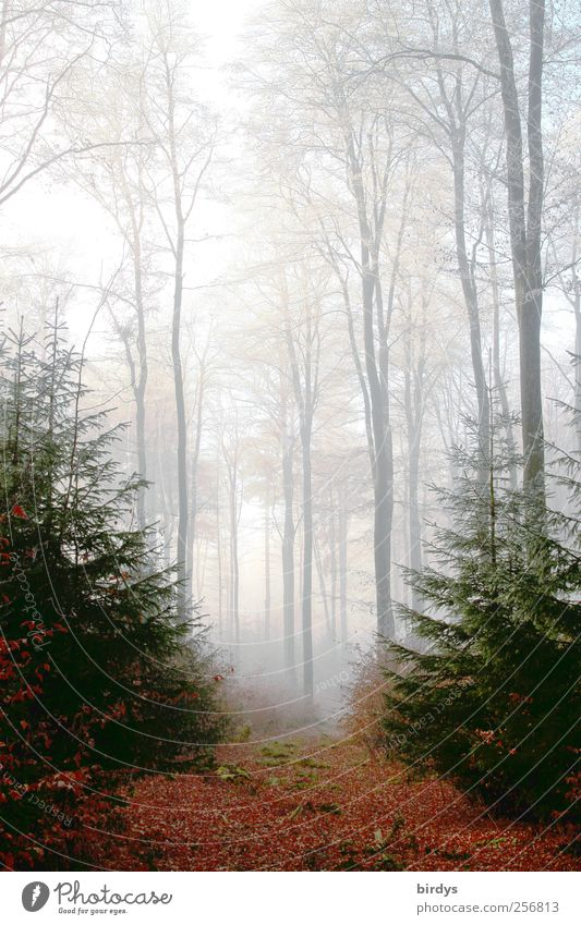Nature Plant Forest Autumn Dream Moody Fog Natural Tall Esthetic Authentic Illuminate Change Uniqueness Romance Peace