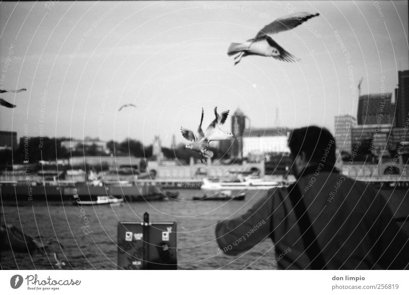 Human being White Black Animal Autumn Moody Bird Masculine Hamburg River Harbour Beautiful weather Analog Seagull Feeding Elbe