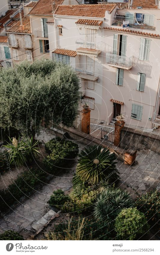 Cannes Summer Plant Garden Park Town House (Residential Structure) Natural Warmth Green Mediterranean France Cote d'Azur Colour photo Exterior shot Deserted