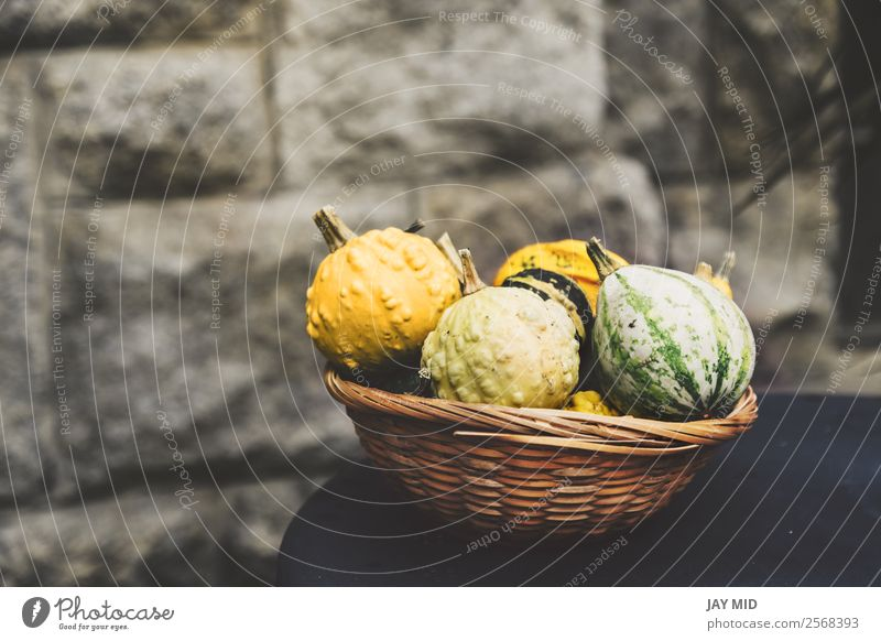 Pumpkins of many varieties, in a wicker basket Vegetable Decoration Thanksgiving Hallowe'en Christmas & Advent Nature Autumn Exceptional Yellow Green Colour