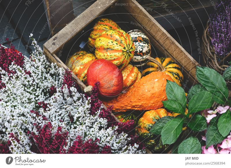 kinds of pumpkins inside a wooden box with flowers Food Vegetable Decoration Thanksgiving Hallowe'en Christmas & Advent New Year's Eve Nature Autumn Flower