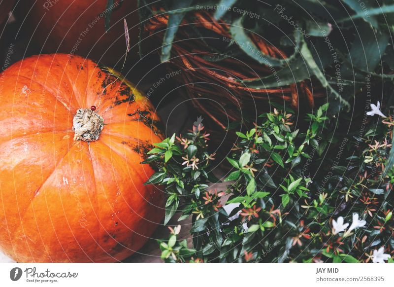 pumpkins and flowers, decoration on the street Food Thanksgiving Hallowe'en Christmas & Advent New Year's Eve Orange Emphasis Exterior shot Deserted