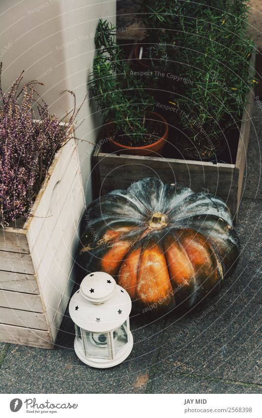 Autumnal decoration with pumpkins in the street Food Vegetable Decoration Thanksgiving Hallowe'en Christmas & Advent New Year's Eve Nature Flower Street