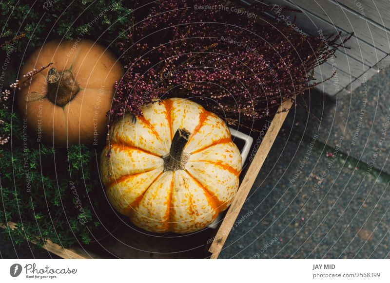 Different kinds of pumpkins inside a wooden box Nature Christmas & Advent Colour Green Flower Street Autumn Food Exceptional Above Decoration Vegetable Seasons