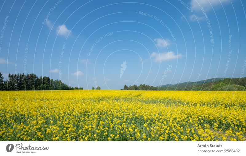 Landscape with rape field Vacation & Travel Trip Far-off places Freedom Summer vacation Agriculture Forestry Environment Nature Plant Sky Clouds Spring