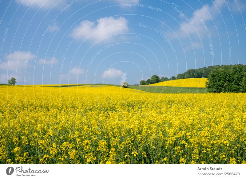 Landscape with rape field Vacation & Travel Trip Far-off places Freedom Summer vacation Environment Nature Plant Sky Clouds Spring Beautiful weather