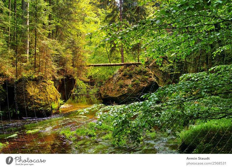 Nature Summer Water Landscape Relaxation Loneliness Calm Forest Lifestyle Environment Spring Rock Moody Contentment Wild