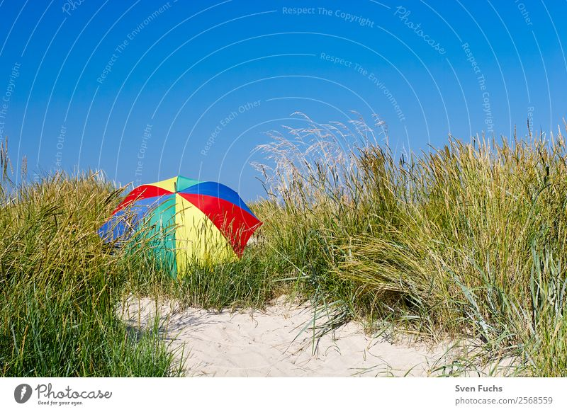 Colourful parasol in a dune Relaxation Calm Vacation & Travel Tourism Summer Sun Beach Ocean Island Nature Landscape Sand Cloudless sky Beautiful weather Blue