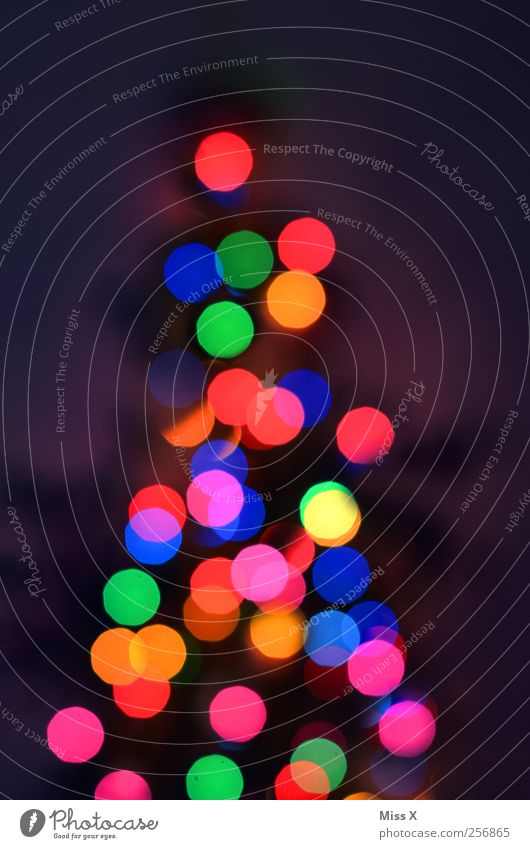coloured dots Christmas & Advent Tree Illuminate Multicoloured Christmas tree Christmas fairy lights Light Electric bulb Christmas decoration Colour photo