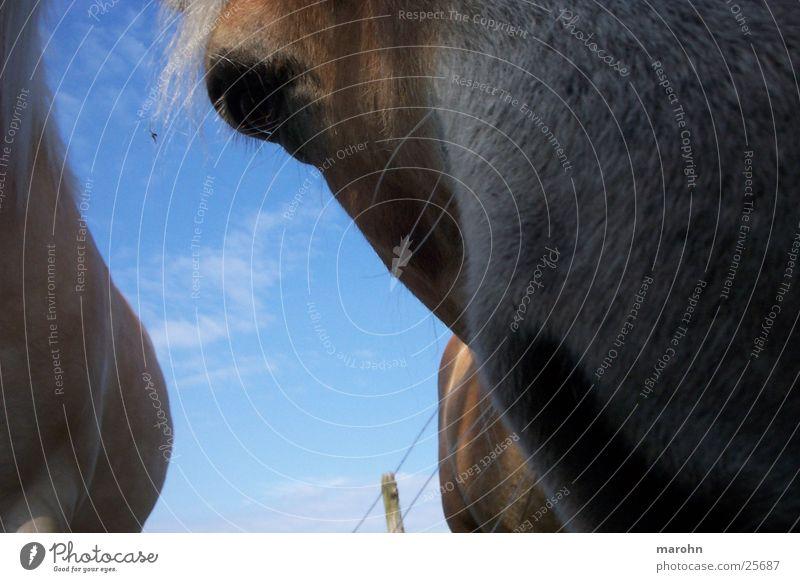 Nature Sky Horse Curiosity Odor Spontaneous Nasal hair